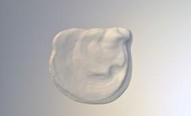Seashell 2011