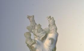 Liquid tree – Solid form 2011