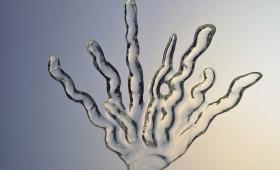 Coral Plant 2011